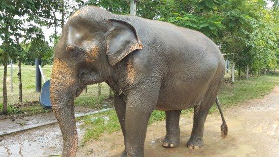 wildlife friends foundation thailand reviews
