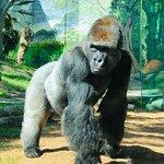 san diego zoo tours reviews
